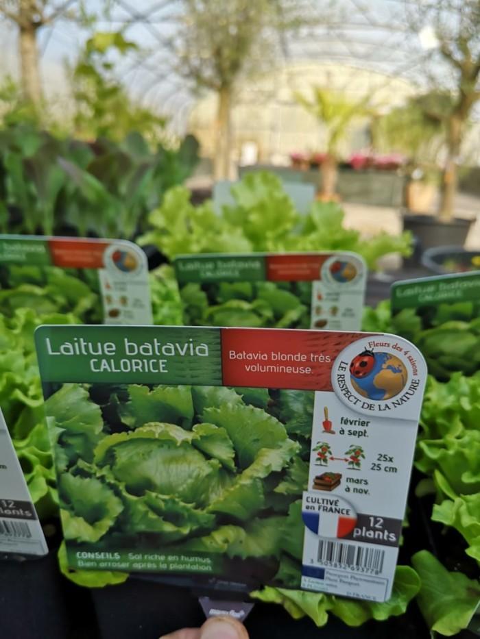 Aucoindemarue Courses En Ligne Coulonnier Fleuriste Paysagiste Salade Batavia 437 Scaled 1