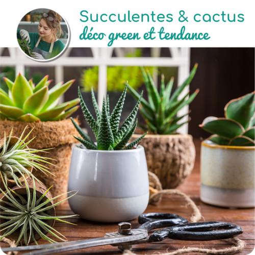 Au Coin De Ma Rue Courses En Ligne Assortiment De Succulentes Et De Cactus