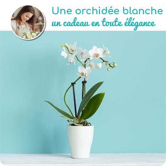 Au Coin De Ma Rue Courses En Ligne Orchidee Blanche En Pot