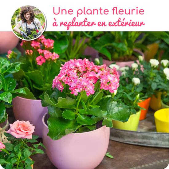 Au Coin De Ma Rue Courses En Ligne Plante Fleurie A Replanter